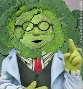 dr bunsen cabbage says.....